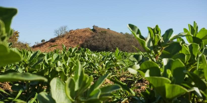 C. WACTAUSEN Tumulus de Tumiac ou Butte de C�sar Arzon (3) - Morbihan Bretagne Sud