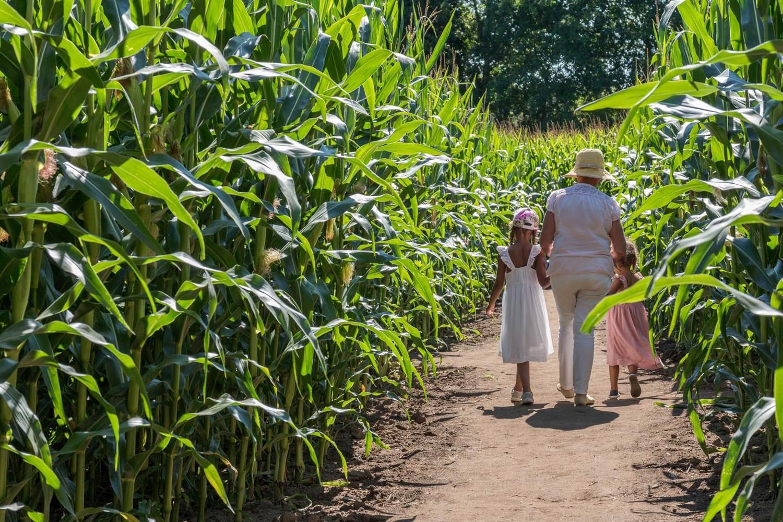 Pop Corn Labyrinthe-Ploemel-Morbihan-Bretagne-sud-04 © ©Fabien MARTY