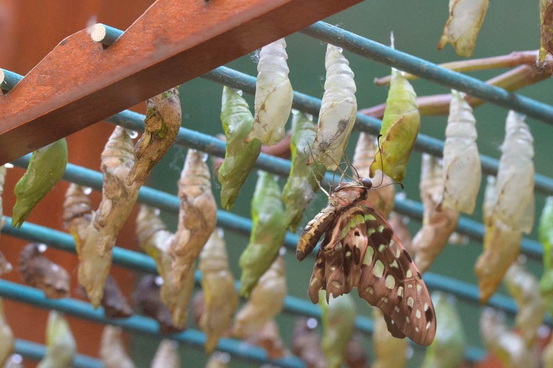 jardin-aux-papillons-morbihan-bretagne-sud-20 © Michel RENAC