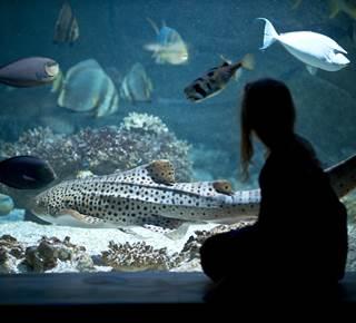 Aquarium de Vannes - Golfe du Morbihan