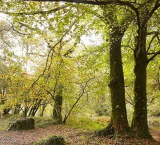 Forêt Domaniale de Pont Calleck