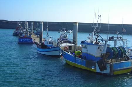 Balade dessinée Criée et port de pêche