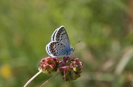 Sortie nature. Papillons et Flore à Sainte-Barbe